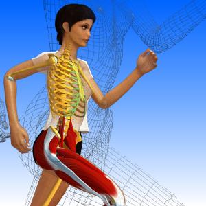 anatomie3D
